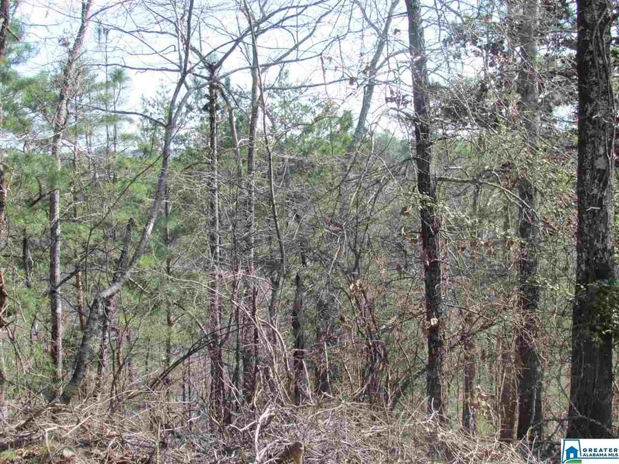 0000 Cogswell Avenue # vacant 61+- acres Pell City, AL - Image 0