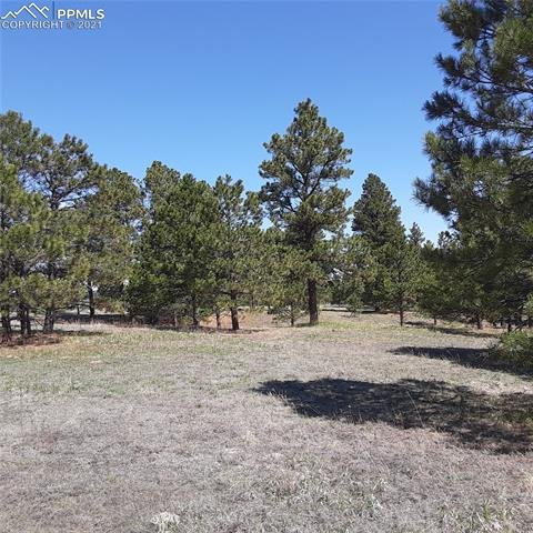 11241 Mosey Trail Colorado Springs, CO - Image 1
