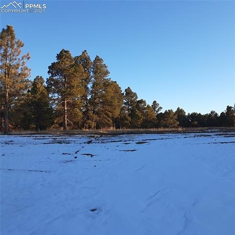 11241 Mosey Trail Colorado Springs, CO - Image 2