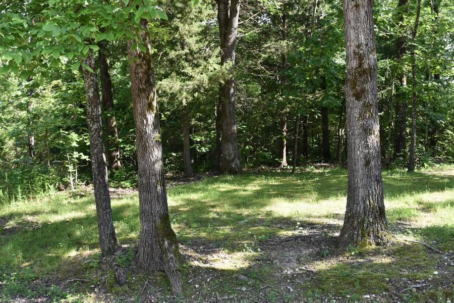 Lot 10 Oak Tree Point Shell Knob, MO - Image 4