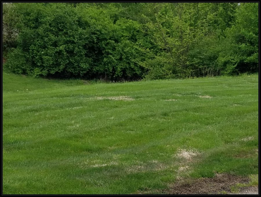 Lot 97 Cypress Point Springfield, MO - Image 12